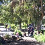 Cut Spending, Save the Trees at Temescal Creek Park
